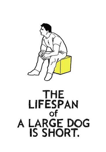 THE LIFESPAN of A LARGE DOG IS SHORT